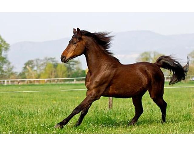 ... cai de cursa, rasa pur sange englez este cea care iti vine in minte