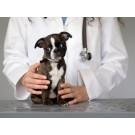 Vaccin impotriva parvovirozei si jigodiei