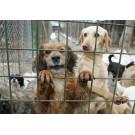 A fost anulat referendumul privind eutanasierea cainilor comunitari