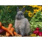 Alimente permise pentru iepuri