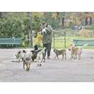 Amenda de 5000 de lei pentru persoanele care hranesc cainii maidanezi