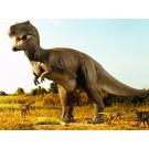 Animalele preistorice din Australia au fost ucise de schimbarile climatice