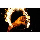 Animalele salbatice, interzise in spectacolele de circ!