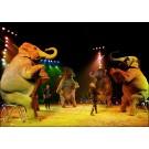 Animalele salbatice, interzise in spectacolele de circ din Columbia