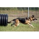 Au aparut cainii antrenati pentru a detecta animalele aflate pe cale de disparitie!
