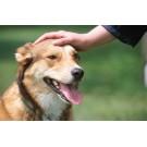 Bolile zoonotice, care se transmit de la animale la oameni