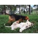 Cainele si leul, cei mai buni prieteni!