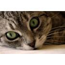 Ce se intampla cand animalul de companie are ochii rosii?