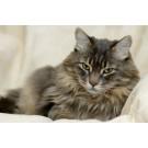 Ce trebuie sa consume pisica pentru a scapa de ghemotoacele de par?