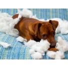 Ce trebuie sa stii despre anxietatea de separare la caini