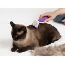 Ce trebuie sa stii despre naparlirea la pisici