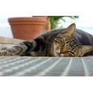 Ce trebuie sa stii despre otravirea la pisici