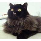Cea mai urata pisica din lume este vedeta pe internet!