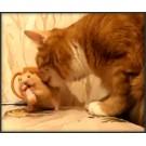 Cel mai lacom hamster!
