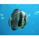 Cele mai ciudate creaturi marine!