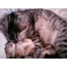 Cele mai haioase pisici ale acestei primaveri!