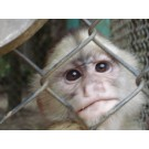 Controversatele metode de la gradina zoologica