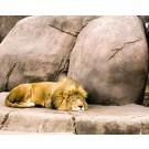 Costa Rica vrea sa inchida gradinile zoologice!