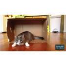 De ce le plac pisicilor cutiile? Iata explicatia oamenilor de stiinta!