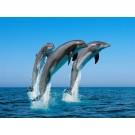 Delfinii isi recunosc prietenii chiar si dupa 20 de ani de la ultima intalnire!
