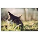 Descopera de ce pisica mananca iarba!