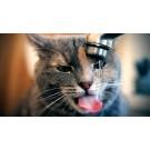 Deshidratarea la pisici