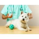 Efectele secundare ale vaccinurilor la animalele de companie