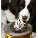 Este animalul tau de companie fumator pasiv?