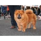 Expozitia canina internationala RasseHunde de la Rostock
