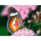 Expozitia temporara ''Fluturi tropicali vii'' la Muzeul Antipa