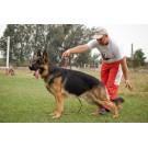 Expozitie canina CAC si CACIB la Turda