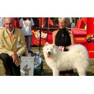 Expozitie canina CACIB la Alba Iulia