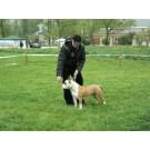 Expozitie canina CACIB la Arad