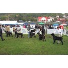 Expozitie canina CACIB la Baia Mare