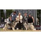 Expozitie de frumusete canina CAC la Oradea