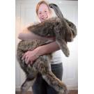 Fa cunostinta cu Ralph, cel mai mare iepure din lume!