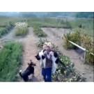 Fetita eroina salveaza o pisica