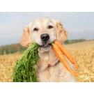 Fructe si legume potrivite pentru nutritia cainelui