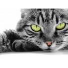 Ghidul complet al iubitorilor de pisici
