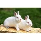 Ghidul complet pentru cresterea iepurilor de companie