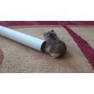 Hamsterul si casa imaginara!