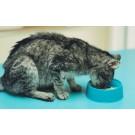 Hipertiroidismul la pisici