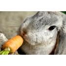 Hrana iepurilor de companie