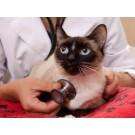 Imunodeficienta la pisici