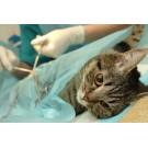 Ingrijirea pisicilor dupa castrare