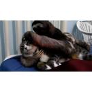 Iubire mare intre un lenes si o pisica!