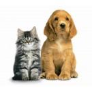 Iubitorii de pisici versus iubitorii de caini