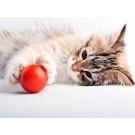 Joaca sau agresivitate la pisici?