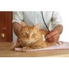 Leucemia la pisici