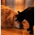 Lucruri surprinzatoare despre caini si pisici - Partea I